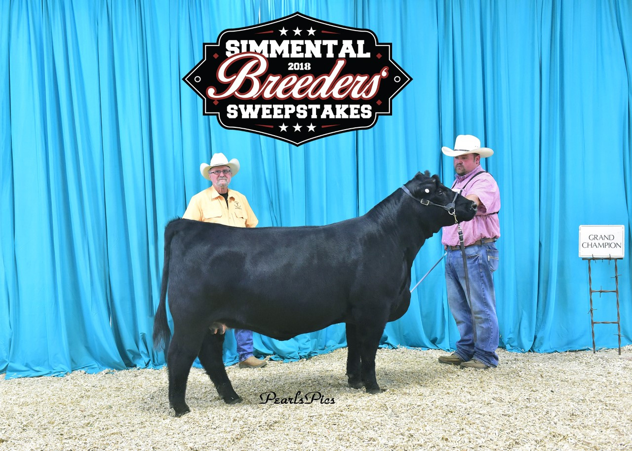 Simmental Breeders Sweepstakes - 2018